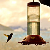Hummingbird and feeder Royalty Free Stock Images