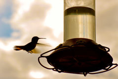 Hummingbird and feeder Stock Photography