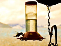 Hummingbird and feeder Royalty Free Stock Photos
