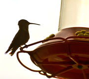 Hummingbird and feeder Royalty Free Stock Image
