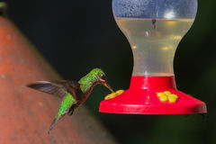 Hummingbird at feeder Royalty Free Stock Photo