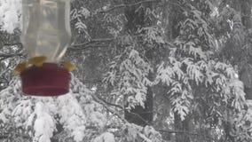 Hummingbird feeder hanging outside near snowy forest