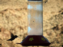 Hummingbird at feeder. Silhouette of hummingbird at feeder Royalty Free Stock Photography