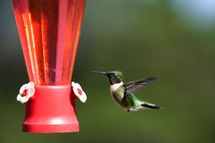 Hummingbird at feeder Royalty Free Stock Photos