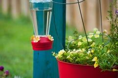 Hummingbird feeder on tomato cage Stock Image