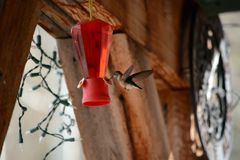 Hummingbird at Feeder Royalty Free Stock Image