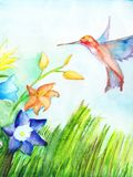 Hummingbird flies to flowers to collect nectar. Watercolor on paper. Copy space.  stock illustration