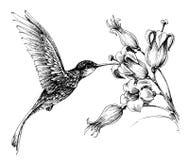 Hummingbird in flight. Floral drawing stock illustration