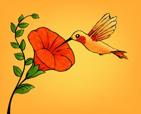 Hummingbird and flower Stock Images