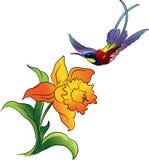 Hummingbird and flower. Vector illustration Royalty Free Stock Photo
