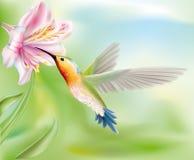 Hummingbird in the flower. Hummingbird bird flies inside the flower.  illustration Royalty Free Stock Photos