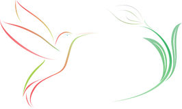 Hummingbird  and flower  illustration. Illustration of a hummingbird  and flower  design isolated on white background Royalty Free Stock Photography