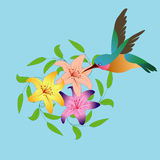 Hummingbird and flowers Stock Image