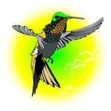 Hummingbird fly. Cartoon style hummingbird fly in Stock Photos