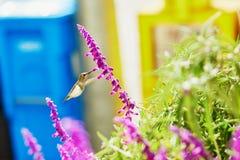 Hummingbird flying next to purple flower Stock Photo
