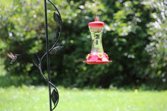 Hummingbird flying to feeder nature stock photos