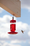 Hummingbird flying to feeding trough Royalty Free Stock Photography