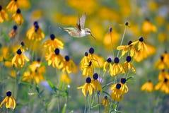Hummingbird in the garden Stock Image