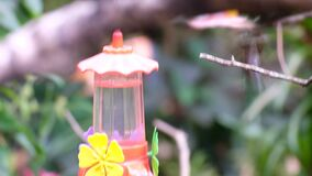 Hummingbird garden where they drink water from drinkers