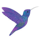 Hummingbird. Stock Images