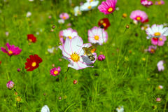 Hummingbird hawk-moth and flowers. Under the sun at outside stock image