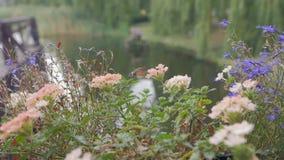Hummingbird Hawkmoth, macroglossum stellatarum collects nectar. From flowers near a beautiful pond stock footage