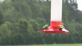 Hummingbird karmienie od dozownika zdjęcie wideo
