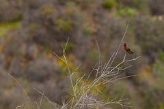 Hummingbird kolory Obraz Stock
