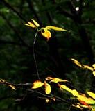 Hummingbird. Looking like hummingbird;nature wonder;Autumn leaves;magic leaves;yellow leaves Royalty Free Stock Photos