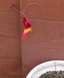 Hummingbird - Metal Art Stock Images