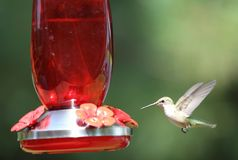 A hummingbird mid-flight by the feeder Royalty Free Stock Photos