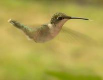 Hummingbird in motion Stock Photos