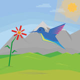 Hummingbird in the mountains Stock Images