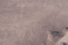 Hummingbird, Nasca Lines. Figure hummingbird in Nazca lines Stock Photos