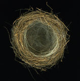 Hummingbird Nest. Isolated on black stock images