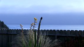 Hummingbird obsiadanie Na roślinie Z oceanem I Chmurzącym niebie W tle zdjęcie wideo