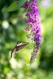 Hummingbird over green summer background vertical image Stock Photos