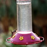 Hummingbird perches on a feeder Royalty Free Stock Photos