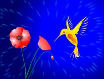 Hummingbird and poppies Royalty Free Stock Image
