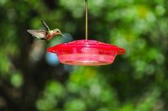 Hummingbird przy dozownikiem Zdjęcia Stock