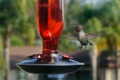 Hummingbird przy Ptasim dozownikiem Zdjęcia Royalty Free