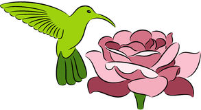 Hummingbird and rose Royalty Free Stock Photos