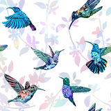 Hummingbird seamless pattern. Hand drawn tropical exotic background. Stock Photography