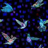 Hummingbird seamless pattern. Hand drawn tropical exotic background. Stock Image
