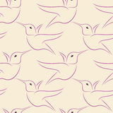 Hummingbird seamless pattern Stock Photography