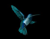 Hummingbird Series : Blues [VECTOR] Royalty Free Stock Photos