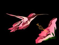 Hummingbird Series : Pinks [VECTOR]. Both hand drawn and shaded in Illustrator. This hummingbird almost feels as if it were 3d rendered royalty free illustration