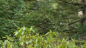Hummingbird sitting high up in tree on twig
