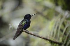 The hummingbird  sitting on the tree. Royalty Free Stock Photos