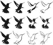 Hummingbird stylization Stock Image